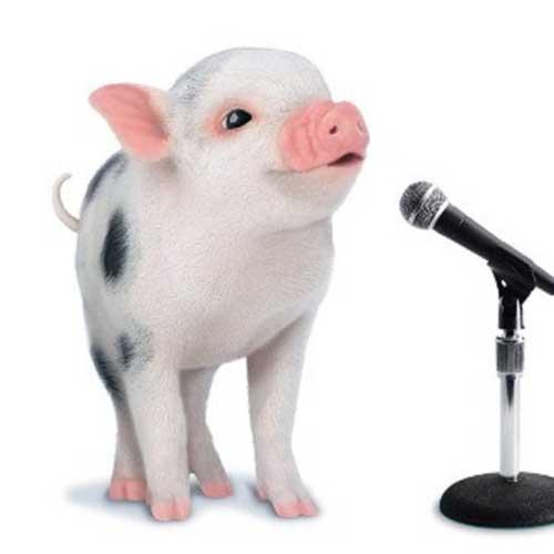 pig-singing